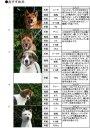.【SOS!】熊本市センター犬の危機