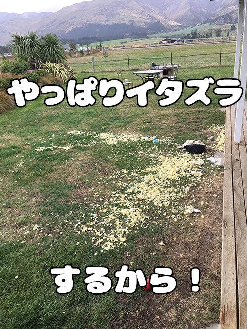 11042019_dog3.jpg