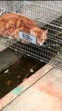 .「餓死させようと1週間放置されていた猫~高知県」