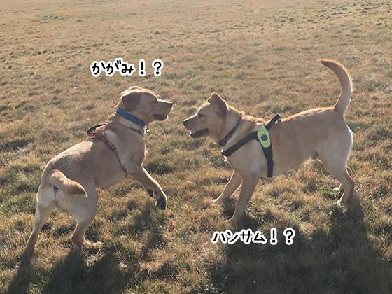 14072019_dog2.jpg
