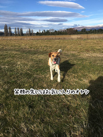 17062019_dogpic3.jpg