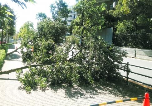 tree73685.jpg