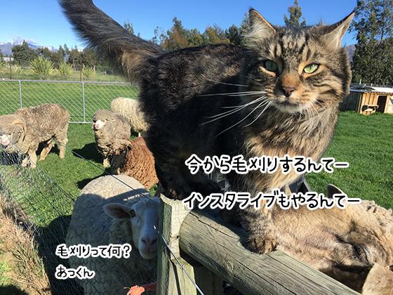 01112020_dogpic1.jpg