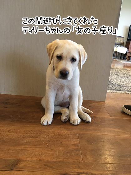 01122020_dogpic2.jpg
