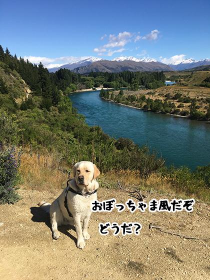 04122020_dogpic10.jpg