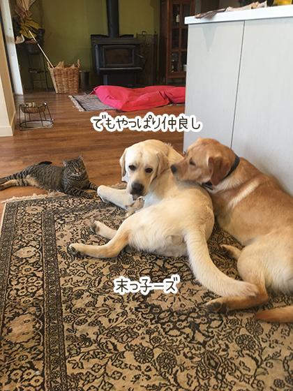 11062020_dogpic1.jpg