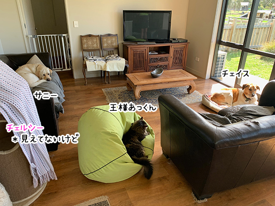 14102020_dogpic1.jpg