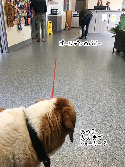 14102020_dogpic4.jpg