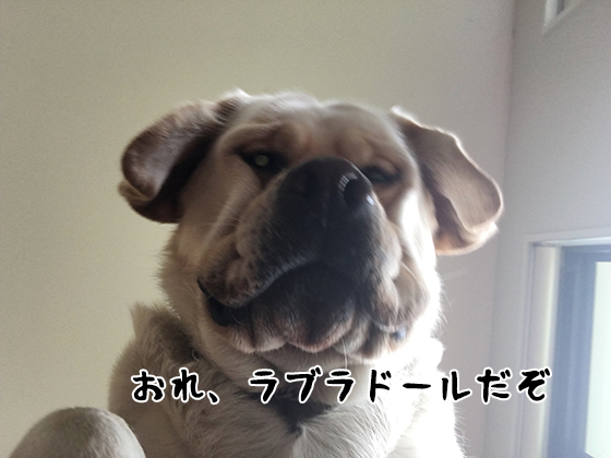 18122020_dogpic10.jpg