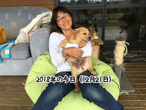 21122020_dogpic6.jpg