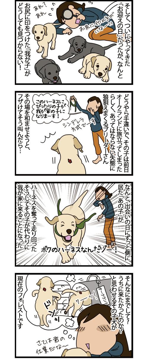 02062021_dogcomic_2.jpg