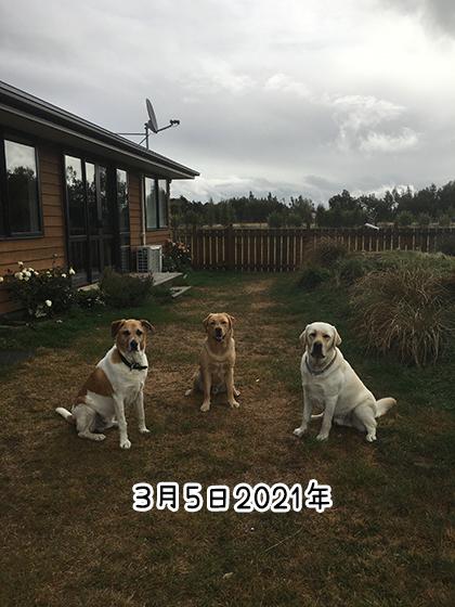 07032021_dog5.jpg