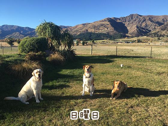 09052021_dog7Sunday.jpg