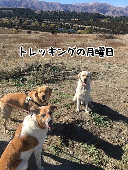 11042021_dog1.jpg