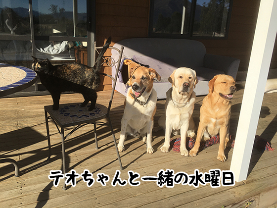 11042021_dog3.jpg
