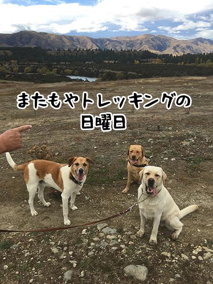 11042021_dog5.jpg