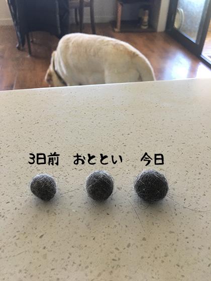 13012021_dog7.jpg