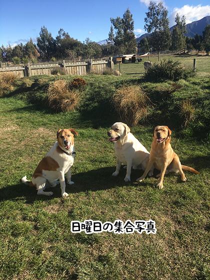 16052021_dog10Sunday.jpg