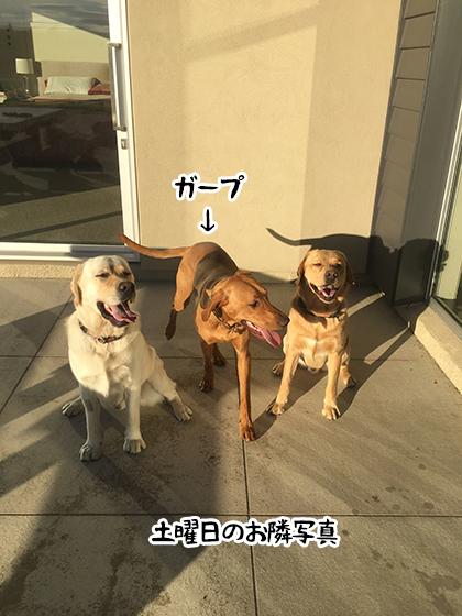 16052021_dog9SaturdayD.jpg