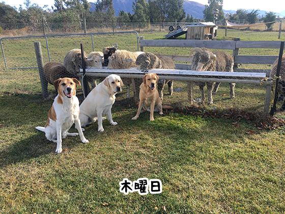 23052021_dog4Thursday.jpg