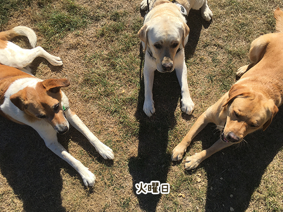 28032021_dogpic2.jpg
