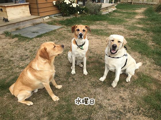 28032021_dogpic3.jpg
