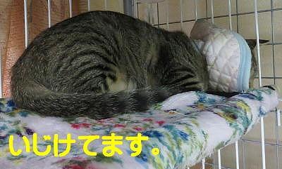エムちゃん11