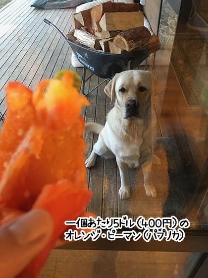 20062021_dogpic5.jpg