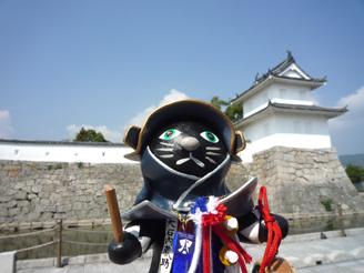 Oishi Kuronosuke cat