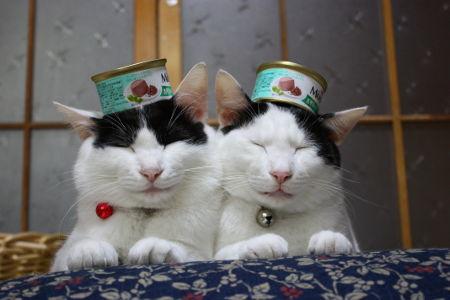 Кот Редискин: Блог буддийских котов