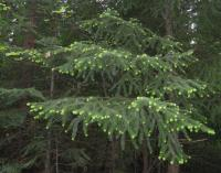 Tree 060210-10001