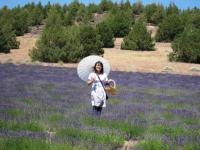 lavender farm 070510-30