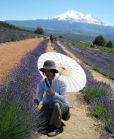 lavender farm 070510-12