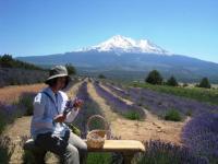 lavender farm 070510-10