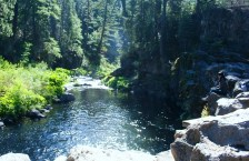 McCloud Falls, 2 web, 9-9-10 116