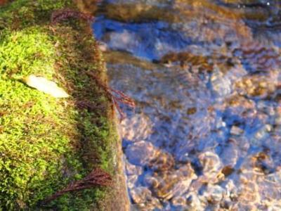 web 雨滝 2013-11-27 167