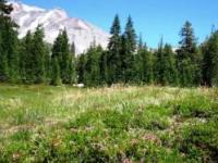 panther Meadows 081210-3