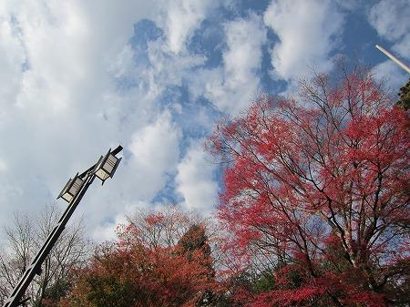 富士浅間神社 10