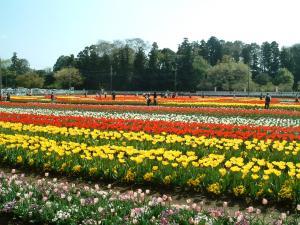 akebonoyama+011_convert_20120427190845.jpg