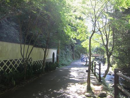 河津七滝 1