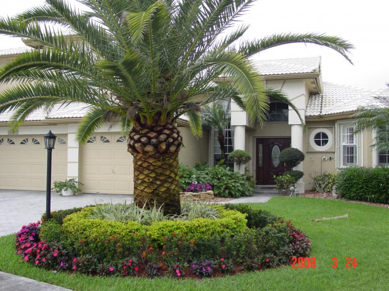 Palm Tree Landscaping Ideas | Home Design and Decor Reviews on Palm Tree Backyard Ideas id=21385
