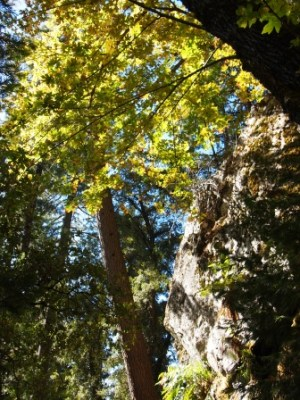 Indian Creek PA125593