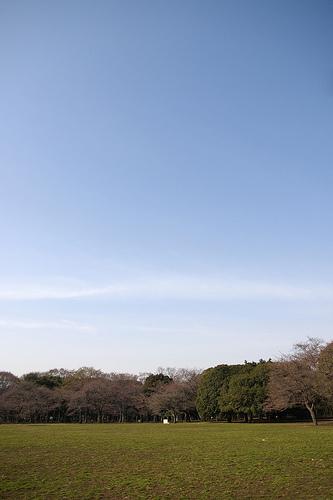 春の空, Yoyogi Park - 無料写真検索fotoq