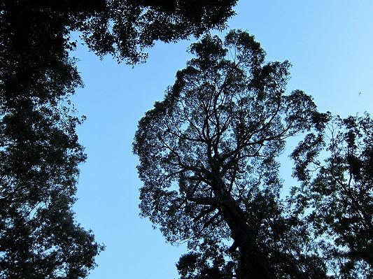 内浦山県民の森 2