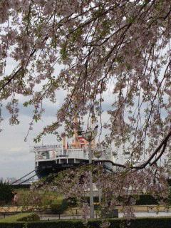 山下公園しだれ桜