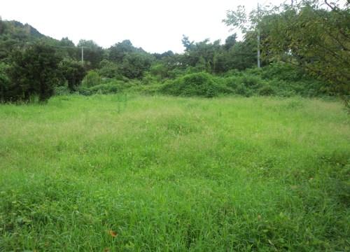 DSC 0055 20140914165642ce5 - 熊本別荘の空き地を有効利用