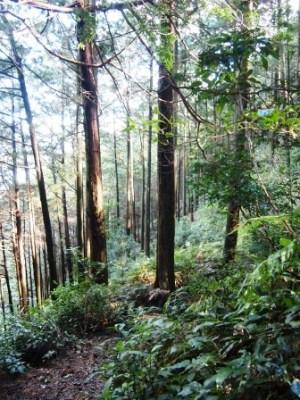 web熊野古道歩き旅 伊勢路20151211032