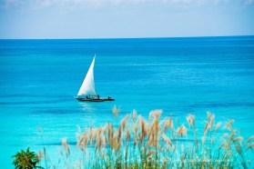 Collection Bateau Zanzibar / Carte de visite personnalisée