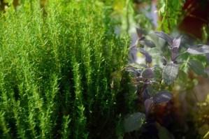 Trois clefs d'herboristerie pour plus de bien-être au quotidien