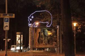 Nilpferd Zoo (1)